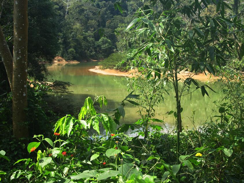 Der Rio Quiquibey, ein Nebenfluss des Beni.